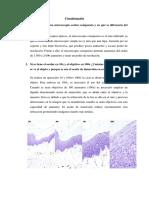 microscopio practica1