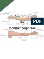 Anatomia Membro Superior