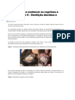 Dentição ruminantes