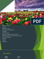 Cultivo del tulipan dante.pptx