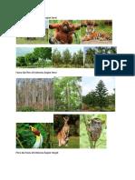 Fauna Dan Flora Di Indonesia DAN DUNIA