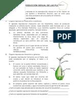 REPRODUCCION SEXUAL DE LAS PLANTAS