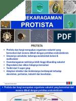 5. Keanekaragaman Protista Dan Fungi