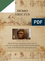 Homo Erectus.pptx