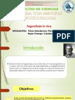 Fagocitosis in Vivo