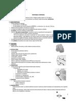 Teoría Proteinas, Enzimas Acidos Nucleicos