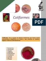 coliformes