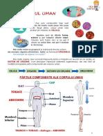 Corpul Uman - clasa a IV-a.pdf