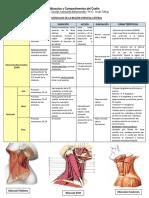 musculos cuello ant. y post..pdf