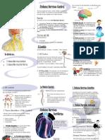 Partes Del Sistema Nervioso-kass