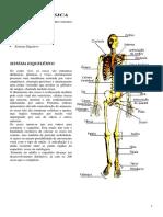 Anatomia Física