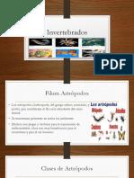 invertebrados+y+cordados.pptx