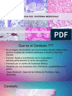 Sistema Nervioso Histologia