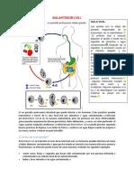 Protozoarios Intestinales Urogenitales Figuras