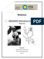 Minthosthachys Verticillata. Com 5