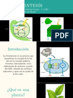 Fotosintesís (2) Presentanción Actualizada 26
