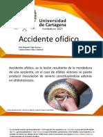 Accidente Ofidico Cami V