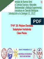 TP20IZ13Pisces
