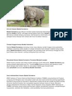 Ciri-ciri Badak Sumatra Dan Orang Utan