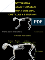 osteologadelacavidadtorcica-110315155934-phpapp02