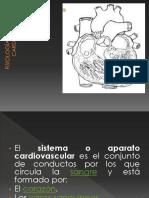 _FISIOLOGÍA cardiovascular.ppt