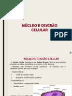 Nucleo e Divisao Celular 1ano