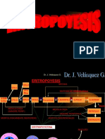 17820770 Clase Hemato 2 Eritropoyesis