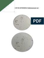 Cladosporiun Sp en Astromelia