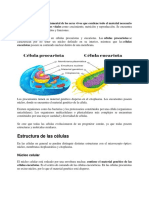 LA CÉLULA.docx