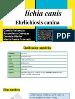Erlichiosis canina