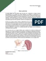Bazo y Páncreas (1)