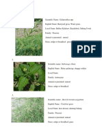 Philippine Weeds