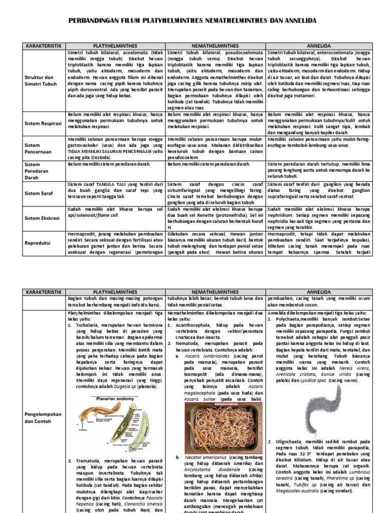 contoh platyhelminthes nemathelminthes dan annelida)