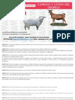 Catalogo caprino y ovino