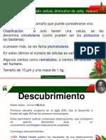 Presentacion Celula 2.pdf