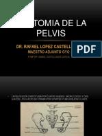 anatomiadelapelvis-131006203639-phpapp01