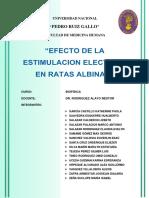 Informe Final 01 Ratas