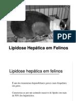 Lipidose hepática felina