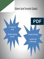 Klasifikasi Sistem Saraf Somatik (Sadar)