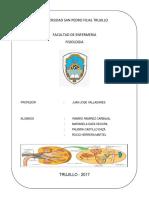 Monografia de Fisiologia