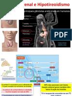 Fadiga Adrenal x Hipotireoidismo