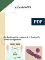 Replicacion_del_ADN.pdf