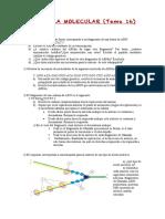 15-16 T 16 Genética molecular.pdf