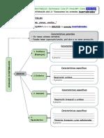 invertebrados esquema.pdf