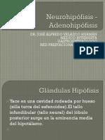 Neurohipófisis - Adenohipófisis
