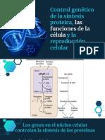 Control Genético de la síntesis proteica - Fisiología