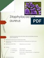 Staphylococcus Aureus 2019
