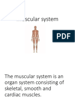Muscular system-WPS Office.pptx