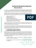 Protocolo Detección Colonización Micorricica