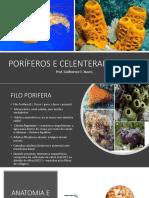 PORÍFEROS E CELENTERADOS.pptx